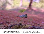 nice close up of a small ... | Shutterstock . vector #1087190168