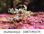 nice close up of a small ... | Shutterstock . vector #1087190174