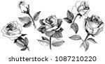 wildflower rose in a vector... | Shutterstock .eps vector #1087210220