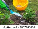 farmer giving granulated... | Shutterstock . vector #1087283090