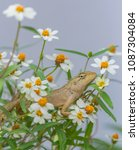 lizard in the flower garden. | Shutterstock . vector #1087304084