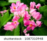 A Pretty Pink Colored Form Of...