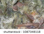 crowd of many different fish... | Shutterstock . vector #1087348118