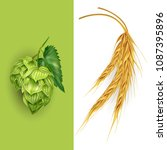 hops and malt. vector... | Shutterstock .eps vector #1087395896