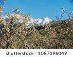 gardens of blooming apples in... | Shutterstock . vector #1087396049