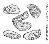 oyster shell set. engraved... | Shutterstock .eps vector #1087427780