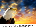 portrait of a bald eagle ... | Shutterstock . vector #1087485398