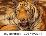 close up head shot full face of ... | Shutterstock . vector #1087493144