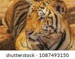 close up head shot full face of ... | Shutterstock . vector #1087493150