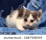 white and gray cute kitten on a ... | Shutterstock . vector #1087508549