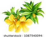 yellow tropical flowers on... | Shutterstock . vector #1087540094