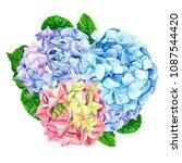 set hydrangea flowers on...   Shutterstock . vector #1087544420