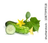 fresh  nutritious  tasty green... | Shutterstock .eps vector #1087599518