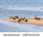 group of male and female common ... | Shutterstock . vector #1087622120