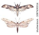 Watercolor Moth Set. Hand Draw...