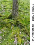 Small photo of Tree tunk and moss