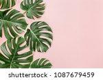 green tropical leaves monstera... | Shutterstock . vector #1087679459