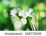Beautiful Irises On Green...