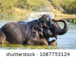 elephant watering himself with... | Shutterstock . vector #1087753124