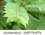 selective and soft focus at... | Shutterstock . vector #1087754576