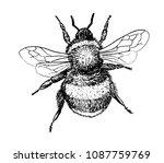 Drawing Of Bumblebee   Hand...