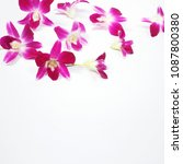 set of pink orchids on white... | Shutterstock . vector #1087800380