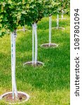 young tree plantation close up | Shutterstock . vector #1087801094