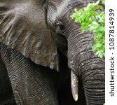 african elephant in the rain ... | Shutterstock . vector #1087814939