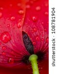 Red Poppy Flower With Rain Drops