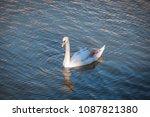 mute swan in creamy juvenile... | Shutterstock . vector #1087821380