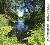 woods in the summer   Shutterstock . vector #1087894370