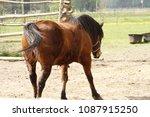 Horse Mare Farm