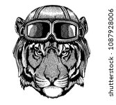 Animal wearing aviator helmet with glasses. Vector picture. Wild tiger Hand drawn image for tattoo, emblem, badge, logo, patch, t-shirt