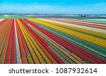 Aerial View Of Bulb Fields In...