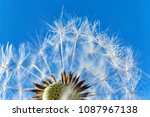 close up of a dandelion or... | Shutterstock . vector #1087967138