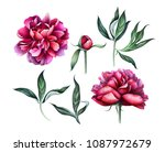 set of elegant burgundy peonies ... | Shutterstock . vector #1087972679
