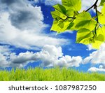 the beautiful white flowers... | Shutterstock . vector #1087987250