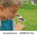 Stock photo little boy holding a young canary bird outside 1088041766