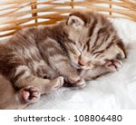 Stock photo funny sleeping baby cat kitten in wicker basket 108806480