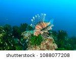 lionfish swim around a dark... | Shutterstock . vector #1088077208