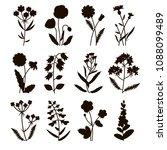Set Of Silhouette Field Flower...