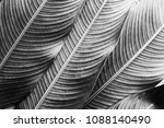light and shadow on tropical... | Shutterstock . vector #1088140490