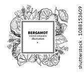 bergamot vector drawing frame.... | Shutterstock .eps vector #1088153609