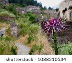 Purple Thistle On Old Stone...