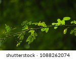 Small photo of sun-kissed leaves arr morr attractive