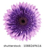 Stock photo violet pink gerbera flower on a white isolated background with clipping path closeup for 1088269616