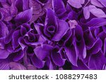 trendy color cncept set with... | Shutterstock . vector #1088297483