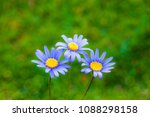 flowers in the natural field | Shutterstock . vector #1088298158