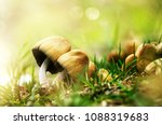 beautiful closeup of forest... | Shutterstock . vector #1088319683
