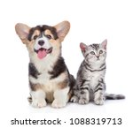 Stock photo happy corgi puppy and scottish tabby kitten looking up together isolated on white background 1088319713
